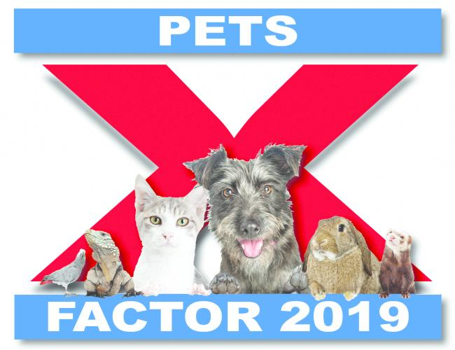 Has your furry friend got the Pets Factor?