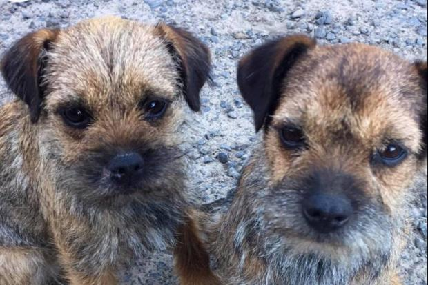 Mum and daughter Ruby and Beetle were stolen last Christmas