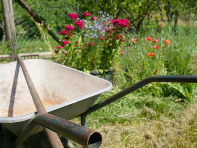 Bogus workmen are offering to carry out gardening work, say Borders police. Photo: Unsplash/Jorg Hofmeier