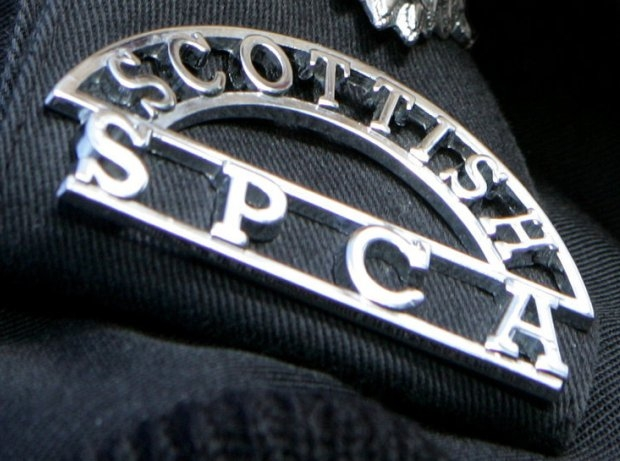 Appeal launched after two suspicious cat deaths in Eyemouth