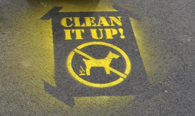 SBC has admitted half of all dog-fouling fines issued under its responsible pet ownership pilot scheme went unpaid. Photo: SBC