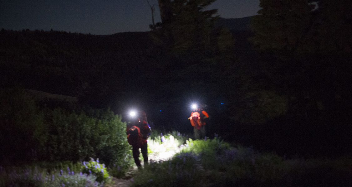 Teenager found after overnight search in Borders forest